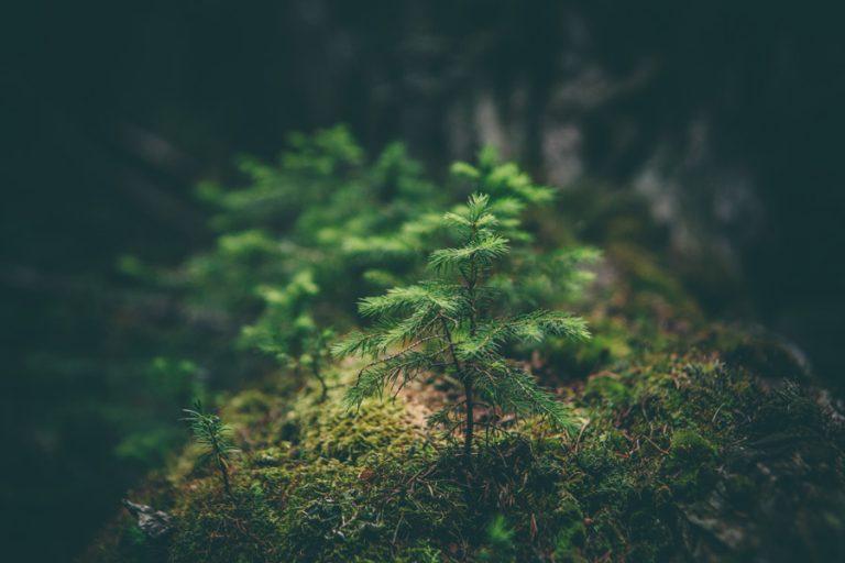Download NCERT Class V Environmental Studies 'Looking Around'